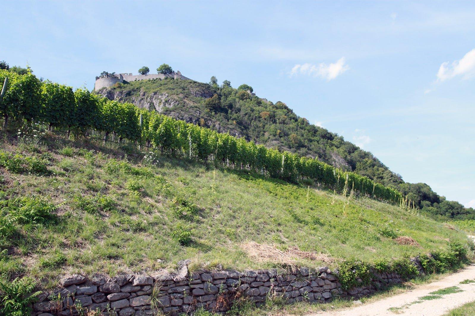 Charakteristische Weine vom höchsten Weinanbaugebiet Deutschlands